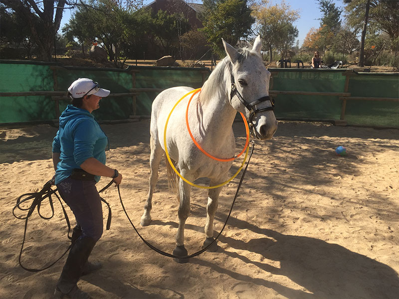 Student desensitizing horse with Dually Halter in Monty Roberts Introductory Course of Horsemanship, Monty Roberts Courses