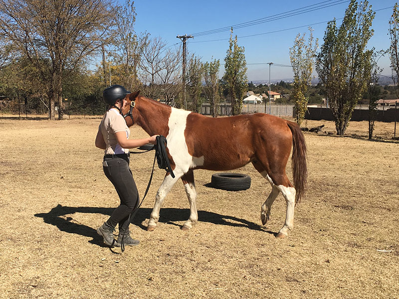 Student learning Dually Halter work in Monty Roberts Introductory Course of Horsemanship
