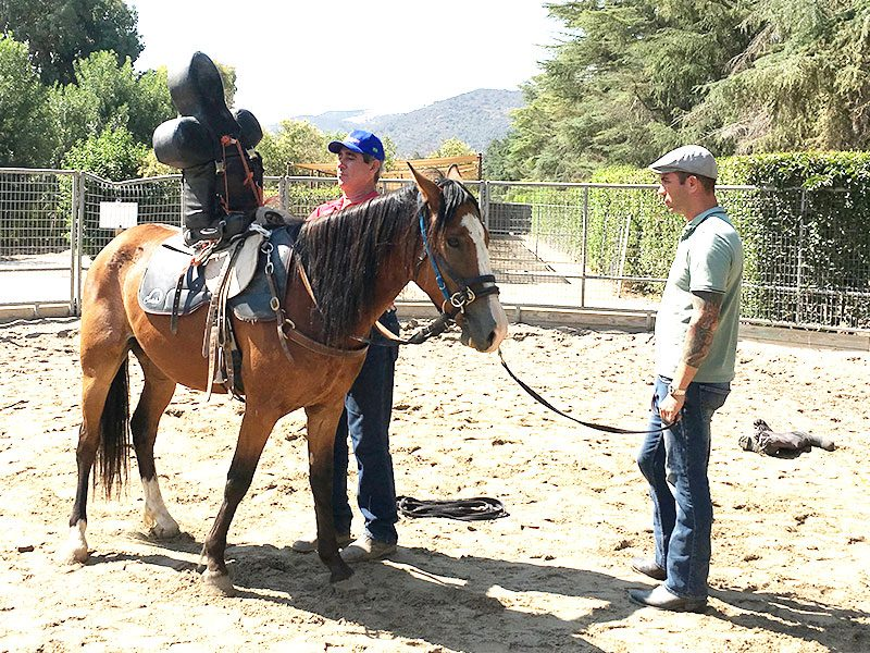 Placing Ardall rider - Monty Roberts Certified Instructor - starting and backing horses