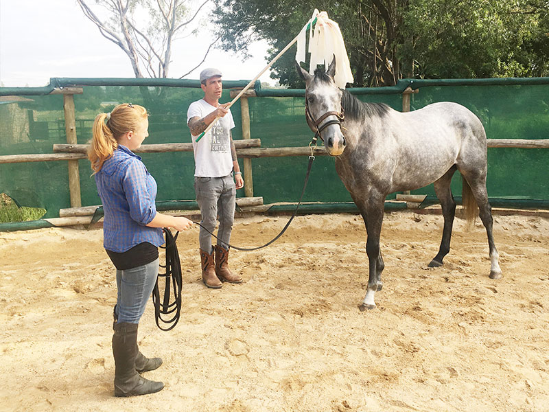 Desensitizing a spooky horse to plastic - Monty Roberts Certified Instructor Simon d'Unienville