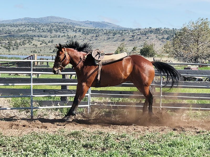 Equiville Horsemanship - Monty Roberts horse training