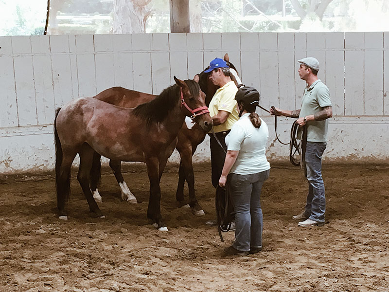 Fly spraying a sensitive horse - Monty Roberts Certified Instructors