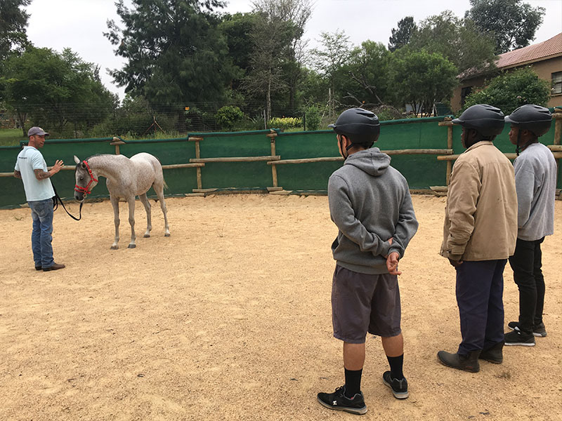 Groom Training - Equiville Manor