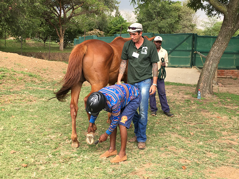 Learning to groom a horse, hoof care - Equiville Horsemanship