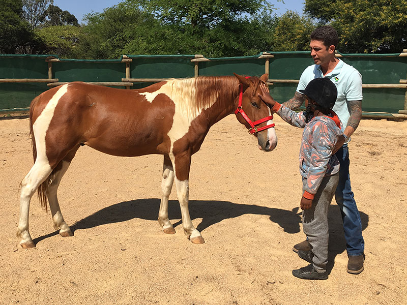 Students desensitizing horse with Dually Halter in Monty Roberts Introductory Course of Horsemanship, Monty Roberts Courses