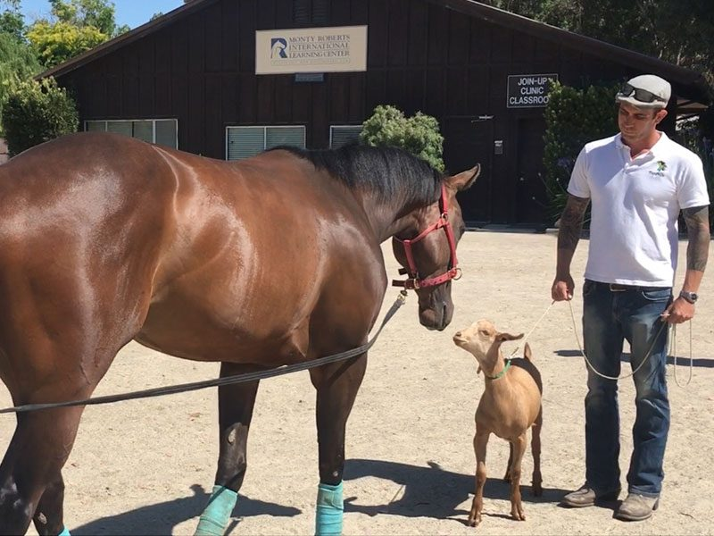 Monty Roberts Certified Instructor Simon Marrier d'Unienville at Flag Is Up Farms Racehorse training