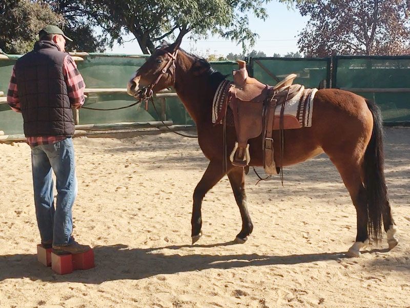 Equiville Horsemanship - horsemanship clinics - remedial horse classes