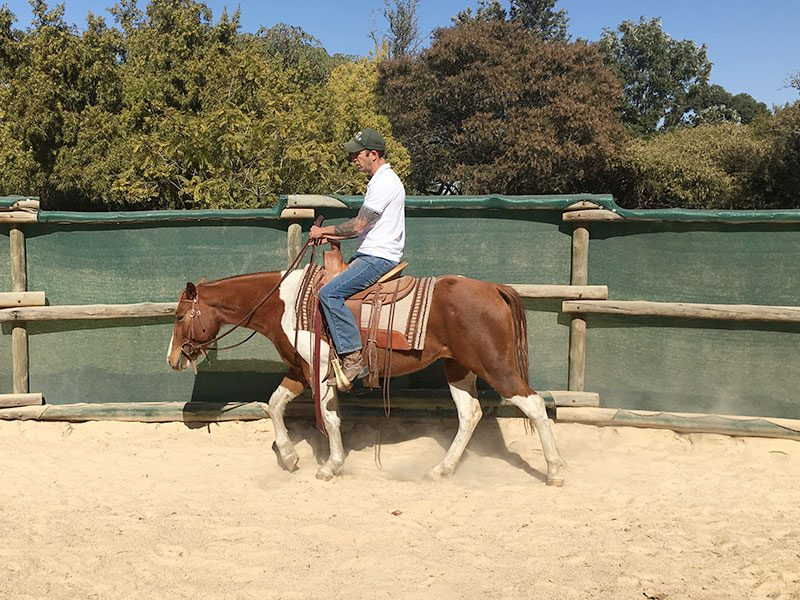 Equiville Horsemanship - Schooling for horses - western pleasure
