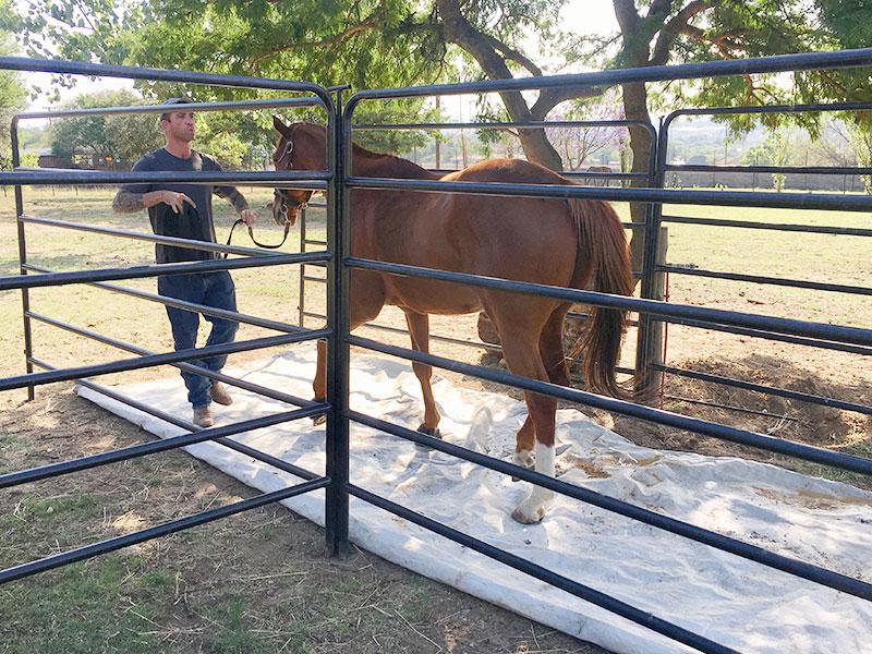 Equiville Horsemanship - horsemanship clinics - trailer loading clinic
