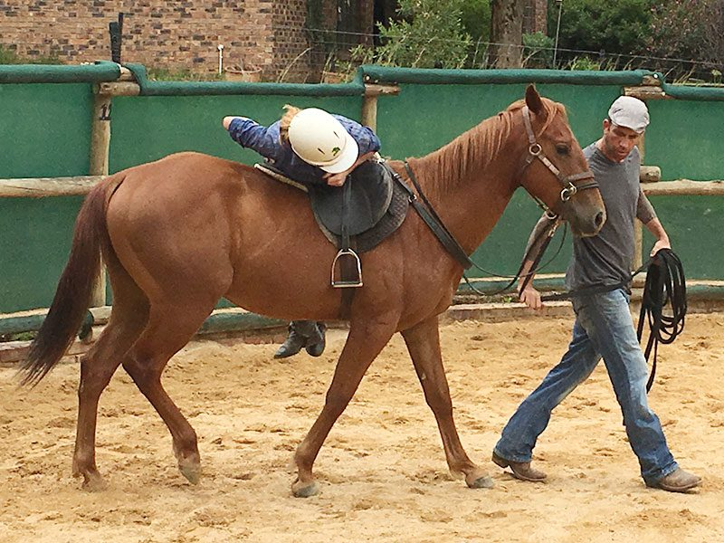 Starting horses in Monty Roberts method by Monty Roberts Certified Instructor - first rider on quarter horse
